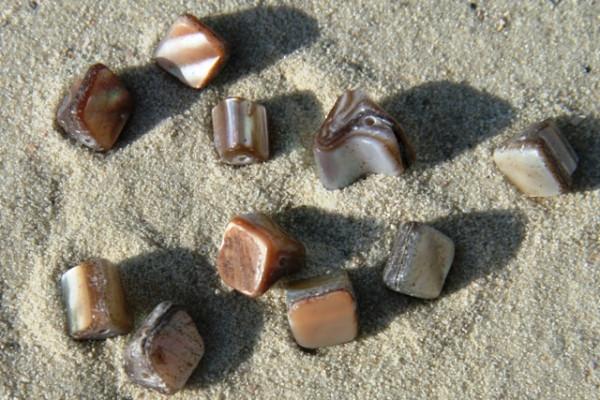 Muschelnuggets, natur, 6-8mm, 10 Stück